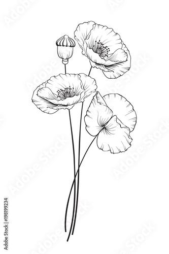 Flat single poppy on white background. Summer or spring illustration of poppy flower.