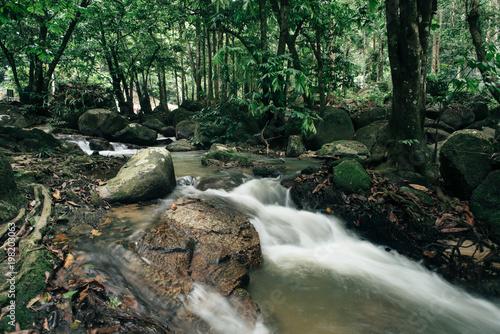 Foto op Canvas Kuala Lumpur River stream water and green trees located in hutan lipur lentang,selangor,malaysia