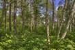 Bemidji State Park on Lake Bemidji