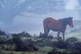Horse in misty moorland.