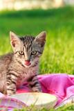 Cute cat drinks milk