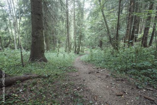 Fotobehang Weg in bos misty summer forest