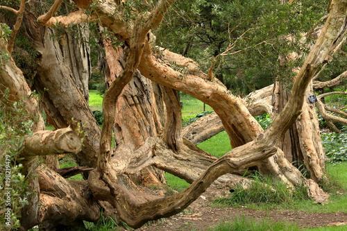 Drzewa i las przy Nuwara Eliya w Sri Lanka