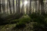 Wald Lichtung im Morgennebel