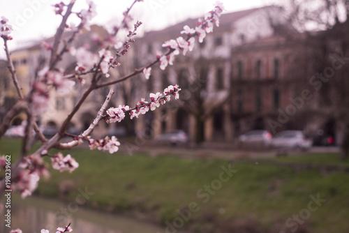 Fridge magnet Fioritura di primavera