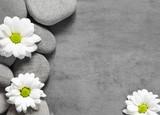 Set of white flowers on pebble