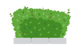 Green shrub fence on white background - 198243809