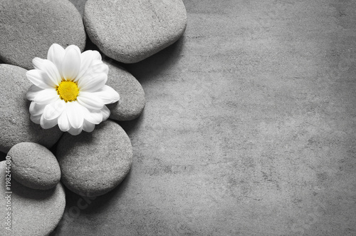 Foto Murales Set of white flowers on pebble