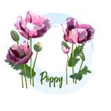 Spring flower – a poppy