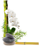 composition florale avec orchidée, bambous et galets
