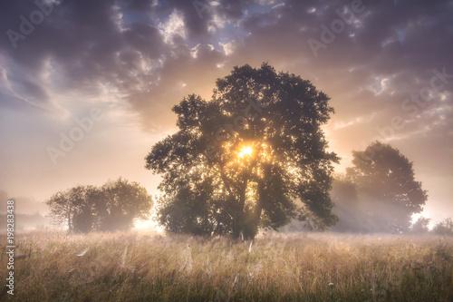 lato-ranku-krajobraz-wielcy-drzewa-na-lace-dalej