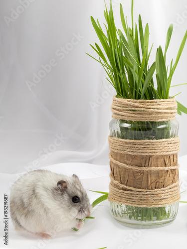 łodygi zielonej trawy w szklanym słoju ozdobione chomikiem w dżungli