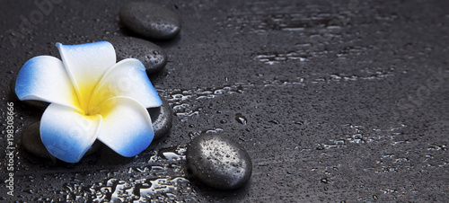 Spa still life with massage stones and frangipani flower
