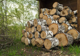 stacked birch logs