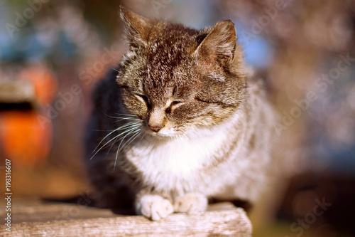 cat basking in the spring sun - 198316607