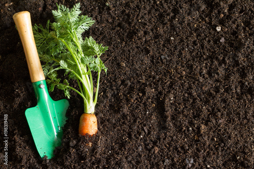 Garden tools and carrot on the soil abstract spring background