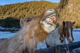 crazy funny horse eating grass