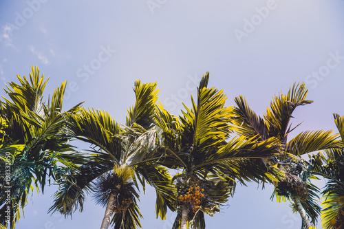 Aluminium Guilin palm tree