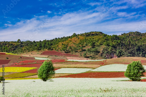 cultivated land fields landscaped near Kalaw Shan state in Myanmar (Burma) Poster