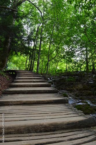 Fotobehang Weg in bos Croatie Plitvice