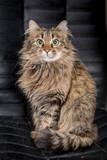 Cute funny tabby gray cat - 198357863