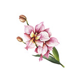 Image Orchids flowers. Hand draw watercolor illustration. - 198361638