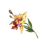 Image Orchids flowers. Hand draw watercolor illustration. - 198361675