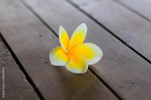 Fotobehang Plumeria Plumeria flower