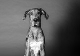 Dramatic dog portrait