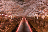 Cherry blossoms at night in Tokyo - 198404680