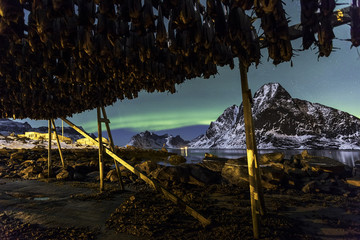 dry fish with northern light