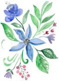 акварельные цветы. ботаническая иллюстрация. акварельная живопись
