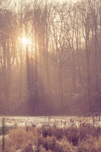 rano-w-lesie-z-mistyczna-mgla