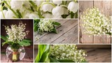 Collage of flowers lily of the valley