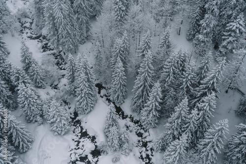 Foto op Plexiglas Grijs Aerial view of snowy forest in rumania