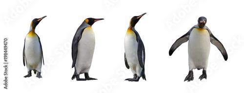 Fototapeten Pinguine King penguins isolated on white background