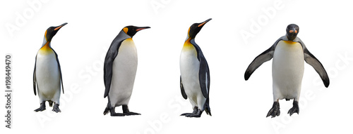 Canvas Pinguin King penguins isolated on white background