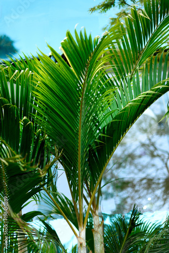 Fotobehang Groene Tropical green palm trees background. Summer, holiday and travel concept with copy space. Palm leaves and branches.