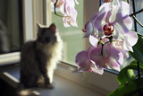 Sad cat on a window sill and an orchid - 198457846
