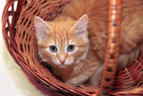 Red cat - 198465212
