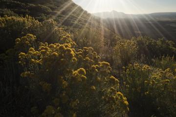 Sleeping Ute Mountain in the evening;  Mesa Verde National Park;  Colorado