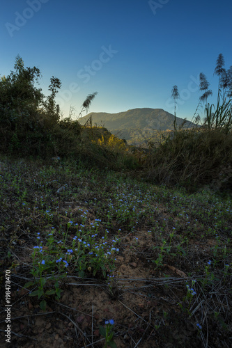 Foto op Aluminium Grijze traf. Forested Mountain morning in Khao Kho, Thailand.