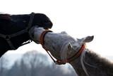 konie miłość