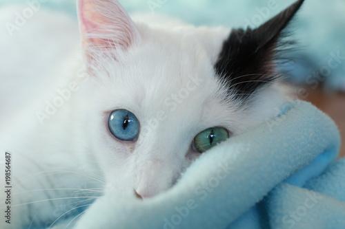 Zamknij się piękne dziwne eyed kota