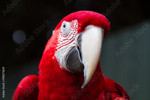 Plexiglas Papegaai Beautiful Red Parrot, Exotic Pet