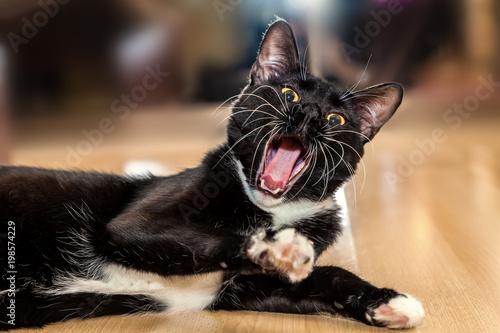 Ziewać czarnego kota, zakończenie