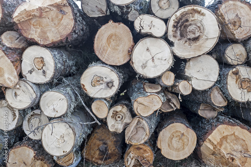 Foto op Aluminium Brandhout textuur Newly cut down logs stacked