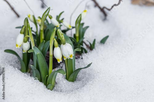 Frühlingserblühen - 198587894