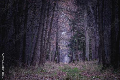 Fotobehang Weg in bos droga w ciemnym lesie