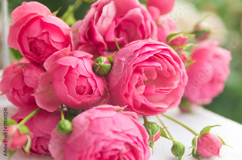 Pink roses background - 198601241